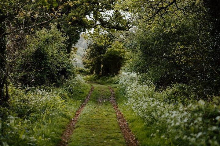 Take a nature hike.