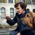 Benedict cumberbatch pet image.