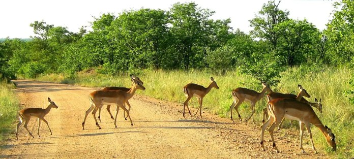 Tips on how to plan a self game drive