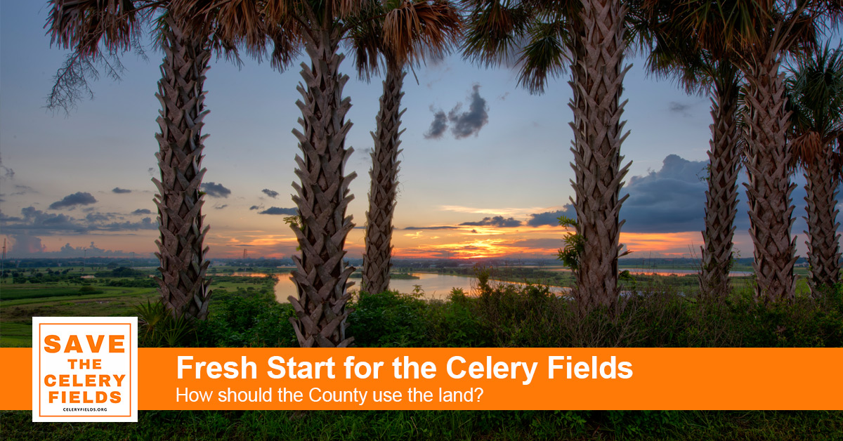 Fresh Start for the Celery Fields