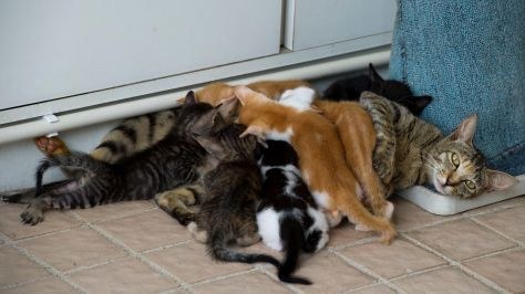 Feeding seven kittens at the same time... (photo taken by PY)