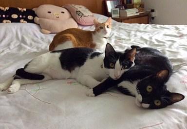 Latte, Milky and Felix