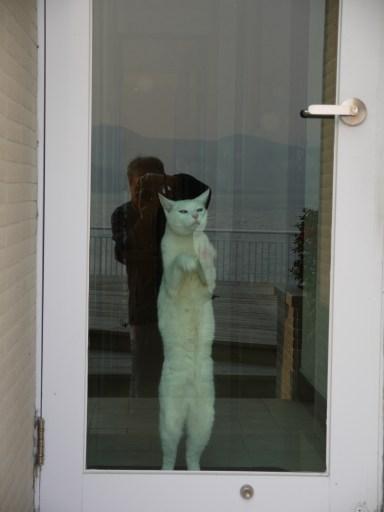 Open the door for me!