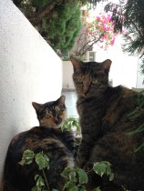 FaFa and Vita, our cats' mothers