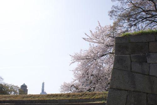 名古屋の桜 【2011年4月9日~4月10日】