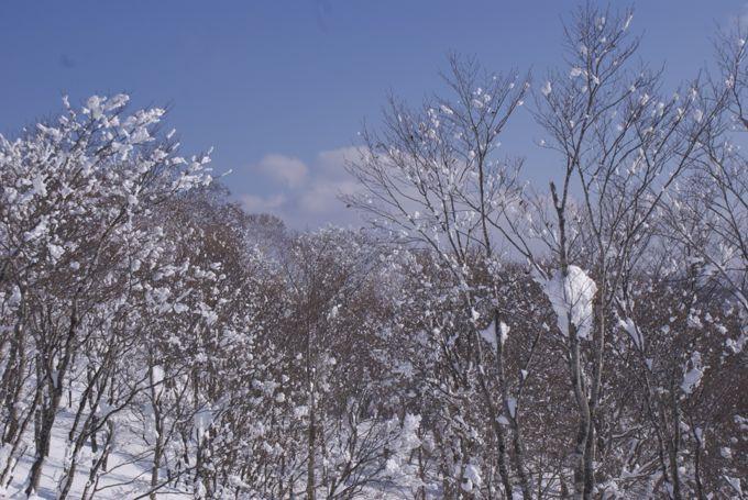 nozawa2012-3.jpg