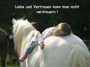 Pferdesteuer