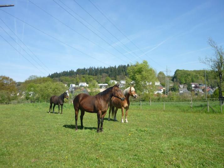 Wegwerf-Artikel Pferd
