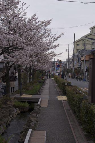 sakura2010-3.jpg