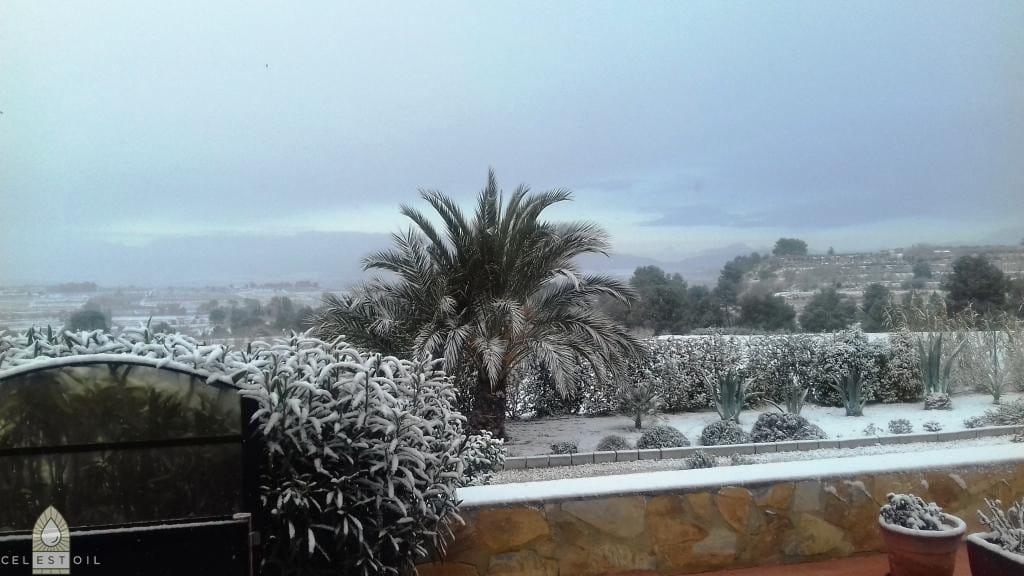 Olijfgaarde-in-Winter