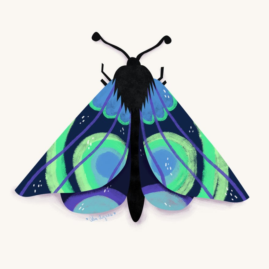 Northern Lights Moth