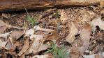 Beside an old log, © 2013 Celia Her City