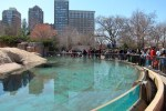 Cynosure (The Kovler Sea Lion Pool at Chicago's Lincoln Park Zoo), © 2013 Celia Her City