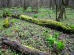 Logs lie undisturbed on the forest floor, © 2013 Celia Her City