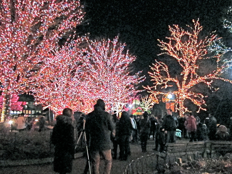 Zoo lights crowd, © 2013 Celia Her City