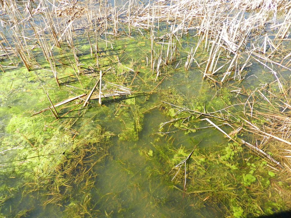 Water quality, Galien River estuary, © 2016 Celia Her City