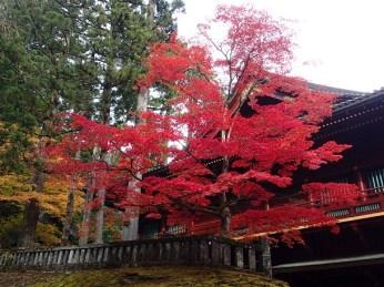 Nikko in autumn