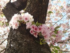 Flowers growing from the tree trunk!