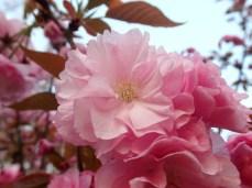 Beautiful, soft pink