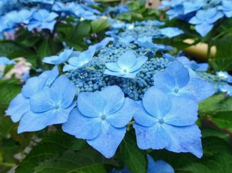 Bluest of blues