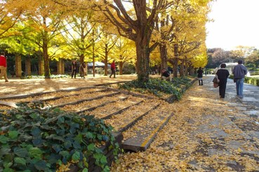 Piles and piles of leaves