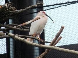 Toki bird breeding centre
