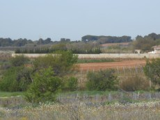 uncultivated fields