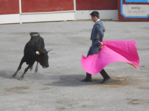 Fiesta bullfighting