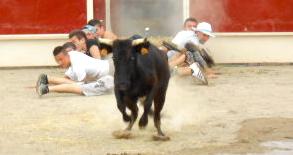 racing bull at the Féria