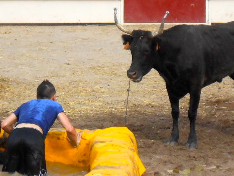bull at the Féria
