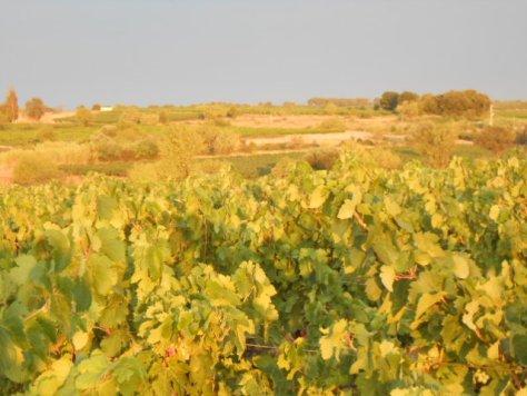 Dawn vines