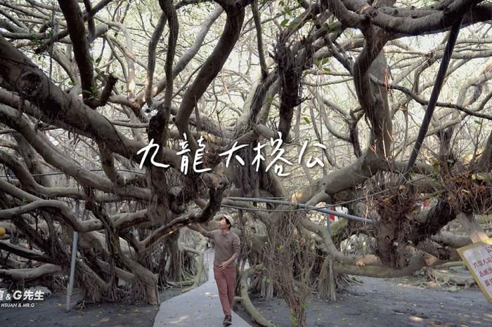 彰化景點 彰化旅遊 九龍大榕公