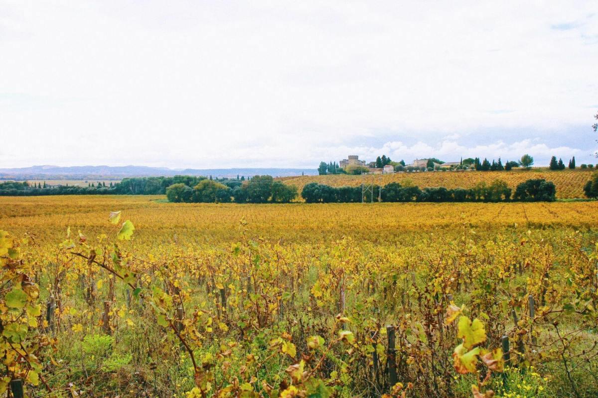 南法淡季怎麼玩?普羅旺斯的5個秋冬旅行提案