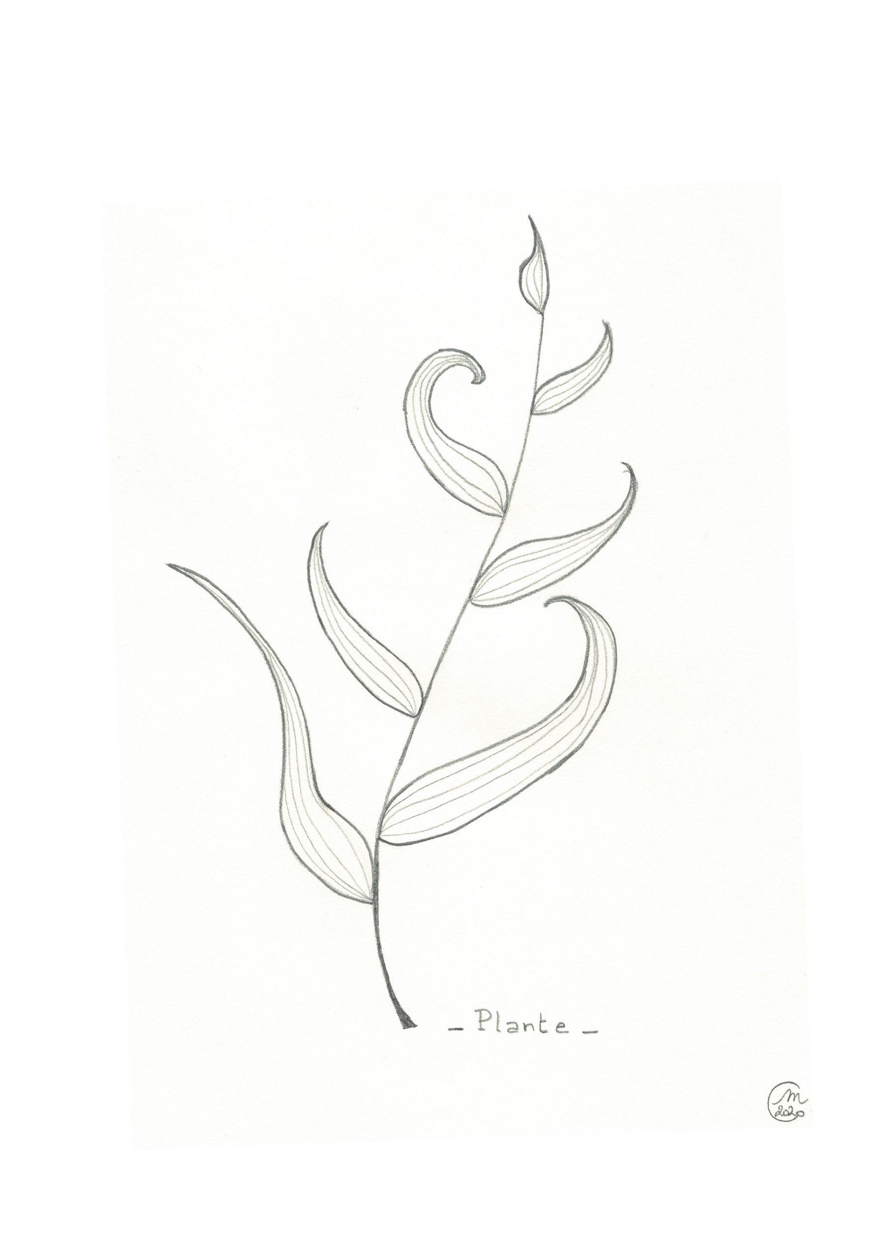 Dessin au crayon d'une plante