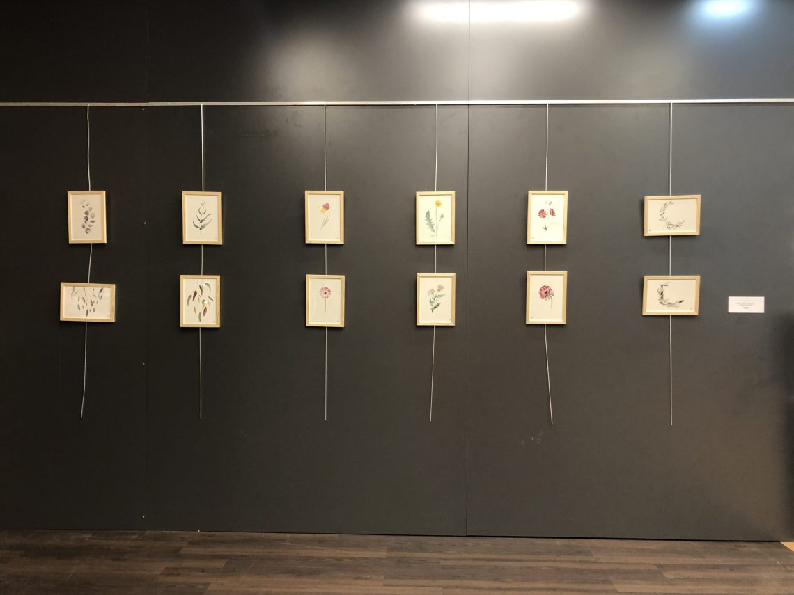photo de l'accrochage des aquarelles en exposition à Cultura