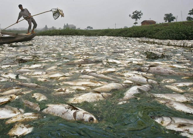 Image result for fish dying as a result of pollution