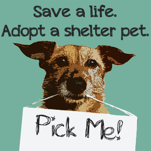 save_a_life_adopt_a_shelter_pet