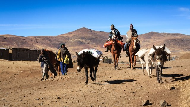 Son unas personas viajando en caballos y llevan a sus burros con carga