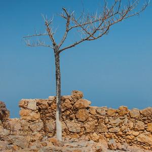Not much left in Masada, Israel.