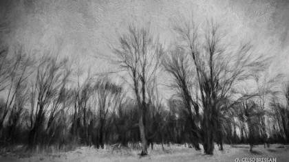 Winter_7282
