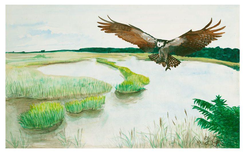 Great Salt Marsh II Osprey ©CEMarqua