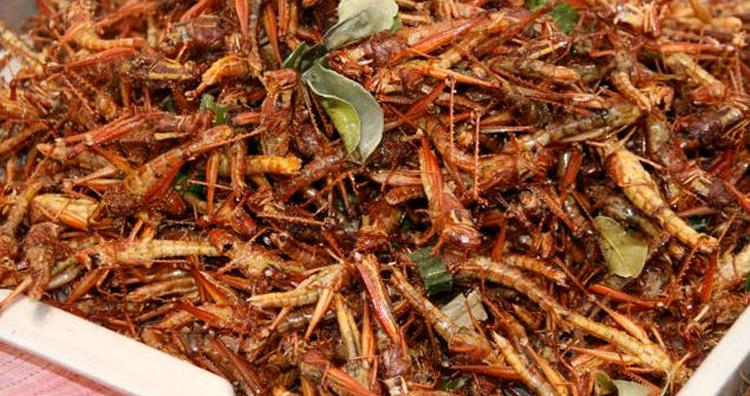 Makanan dari serangga khas Indonesia