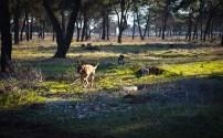 Dio parka za pse gdje će biti postavljene sprave