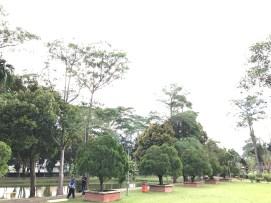 Tasik Y beuatiful trees