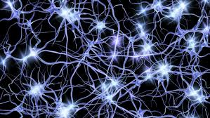 How our brain – or our neurons – works define our reality
