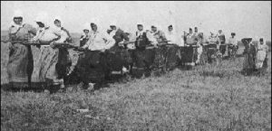 Doukhobor women pulling the plough.