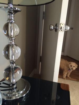 Dog Kennel Fees Worksop