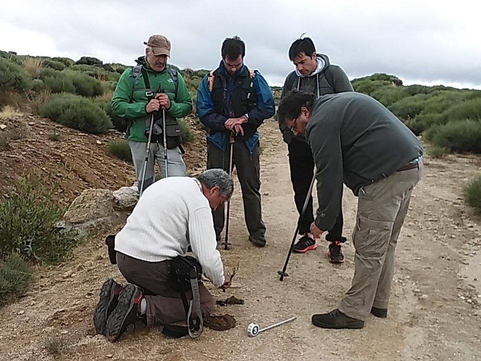 Nueva jornada con los voluntarios del Censo del Lobo Ibérico en Ávila.