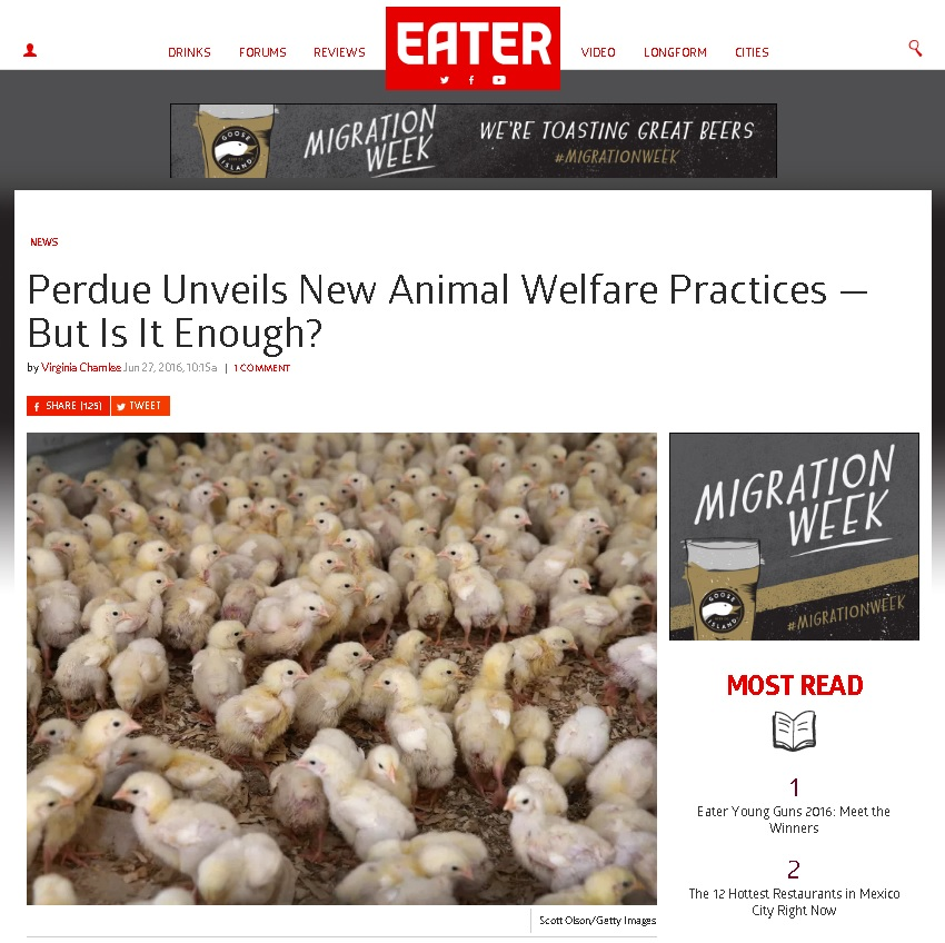 Eater Chickens Perdue Article