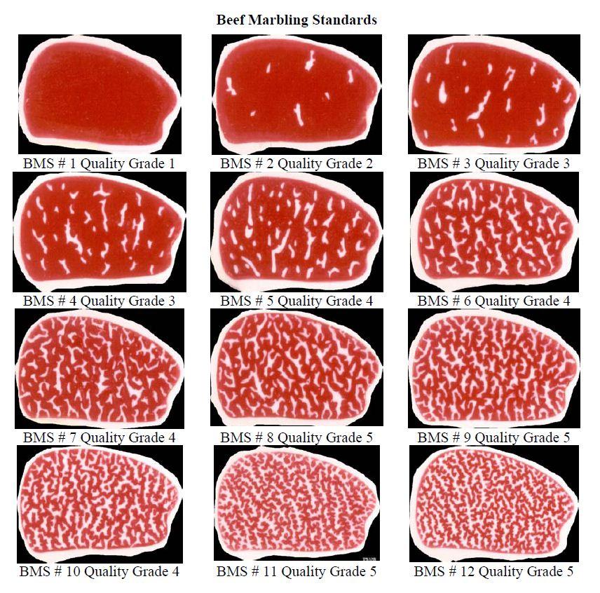 wagyu-beef-chart